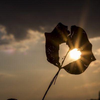 sun-Rain-Carnation_1280-1024x682