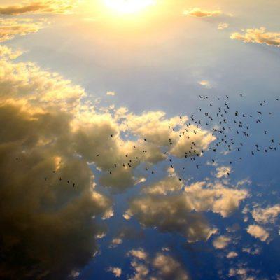 sunset-birds-sq
